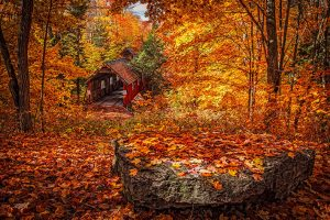 Une beauté naturelle ou les couleurs offrent un véritable tableau